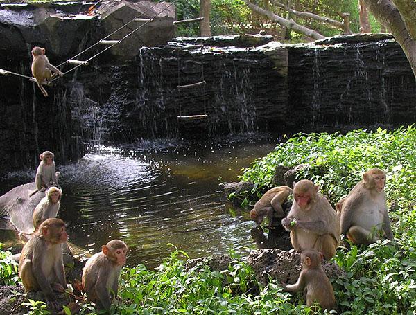Остров населен людьми и обезьянами
